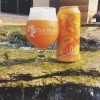 Tree House JULIUS / BRIGHT with CITRA  4 Pack